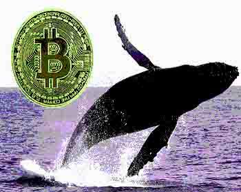 Kripto para balinaları tarafından tutulan Bitcoin miktarı, 3.5 aylık düşüşün ardından yeni bir zirveye ulaştı
