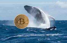 En Büyük Bitcoin Balinalarından Biri 24 Milyon Dolar Değerinde BTC Satın Aldı