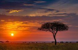 Chainalysis'e Göre Afrika'da Kripto Kabulü 2021'de %1,200 Arttı
